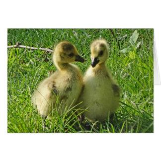 Cartão Pares amarelos bonitos de Gosling dos gansos de