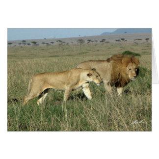 Cartão Pares do leão (dos Lions Clube) (Masai Mara,