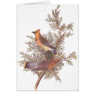 Cartão Pares do pássaro do Waxwing de cedro de Audubon no