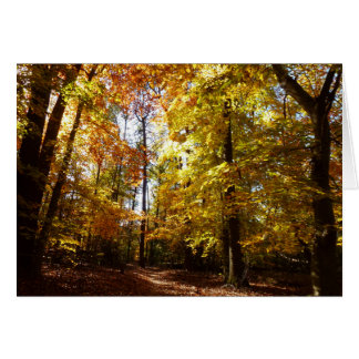 Cartão Parque do cinturão verde na cena da natureza da