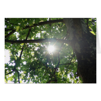 Cartão Parte superior da árvore