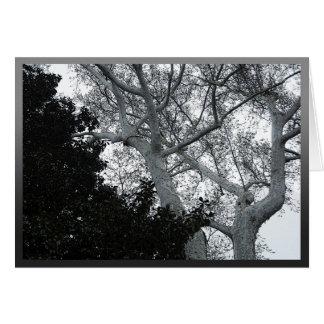 Cartão Partes superiores preto e branco da árvore