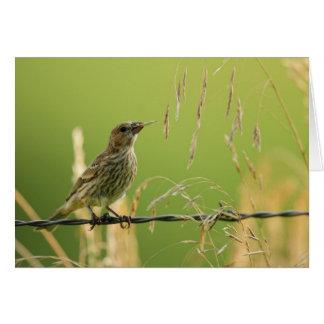 Cartão Passarinho que come sementes de uma grama selvagem