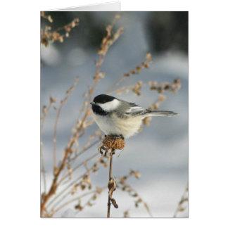 Cartão Pássaro