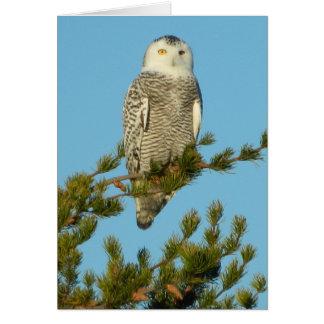 Cartão Pássaro árctico de permanência em contacto da