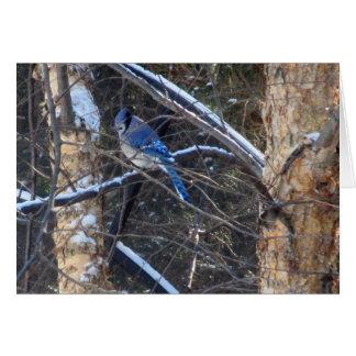 Cartão Pássaro de Jay azul em árvores do inverno