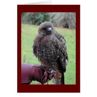 Cartão Pássaro de rapina