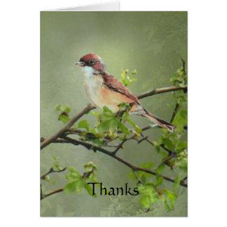 Cartão Pássaro de Whitethroat dos obrigados para o