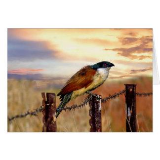Cartão Pássaro do cuco do Coucal de Burchell