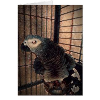 Cartão Pássaro do papagaio do cinza africano