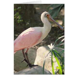 Cartão Pássaro do Spoonbill