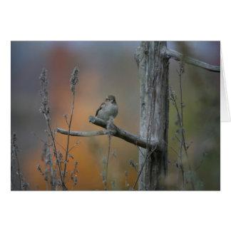 Cartão pássaro na parada de caminhão