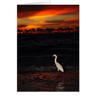 Cartão Pássaro no por do sol