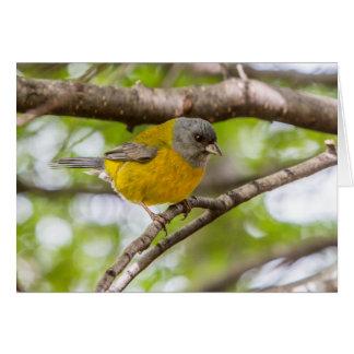Cartão Pássaro Patagonian