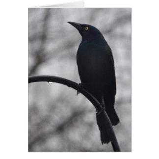 Cartão Pássaro preto