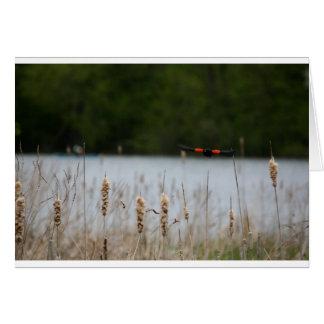 Cartão Pássaro vermelho do preto da asa sobre o rio