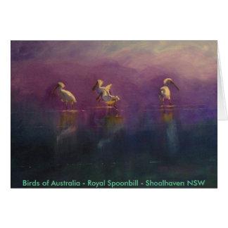 Cartão Pássaros de Austrália - Spoonbill real…