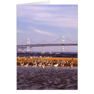 Cartão Pássaros na baía de Chesapeake