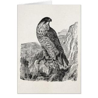 Cartão Pássaros retros personalizados do falcão de