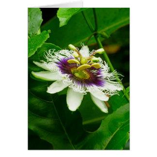 Cartão Passiflora
