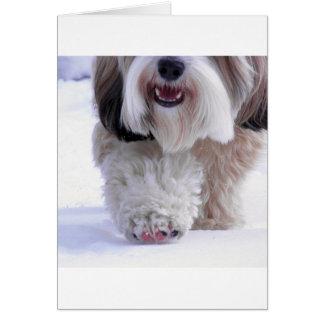 Cartão Pata macia bonito da neve de Terrier tibetano