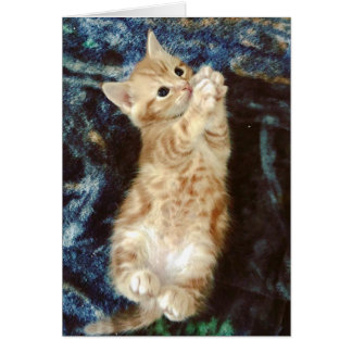 Cartão Patas do gatinho bonito por favor