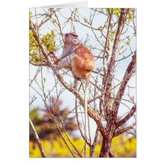 Cartão Patas é acima de uma árvore