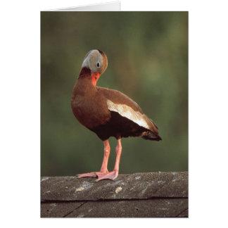 Cartão pato de assobio Preto-inchado