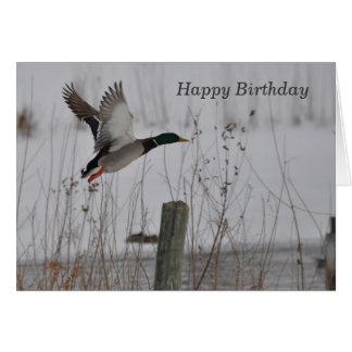 Cartão Pato do pato selvagem do feliz aniversario