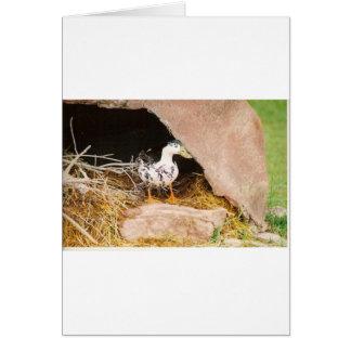 Cartão Pato que guarda a caverna