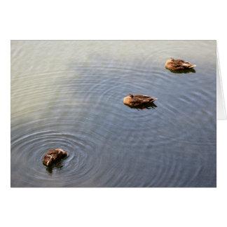 Cartão patos em uma lagoa