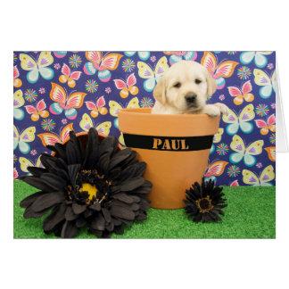 Cartão Paul, foto da semana 5