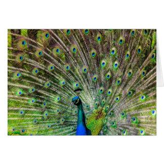 Cartão Pavão bonito, colorido