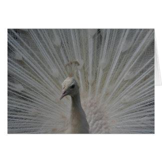 Cartão Pavão branco