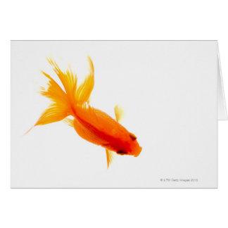 Cartão Peixe dourado, vista aérea