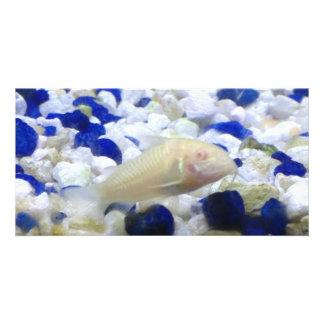 Cartão Peixes seixos e do gato azuis e brancos do albino