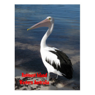 CARTÃO - pelicano