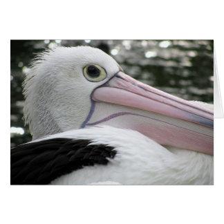 Cartão Pelicano australiano