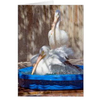 Cartão pelicano branco na piscina