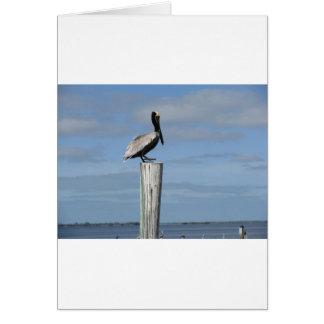 Cartão Pelicano de Florida em um cargo na doca