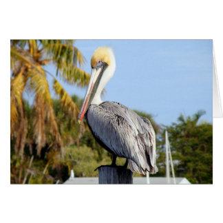 Cartão Pelicano na angra do jarro