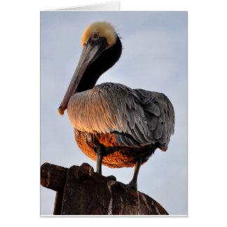 Cartão pelicano no por do sol