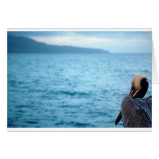 Cartão pelicano pacífico