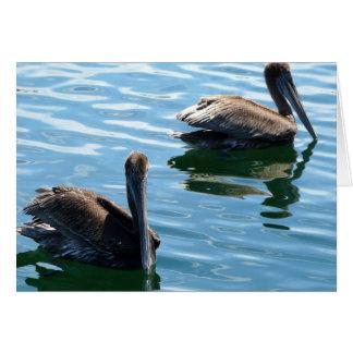 Cartão Pelicanos