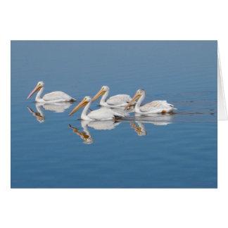 Cartão Pelicanos brancos no lago Barr