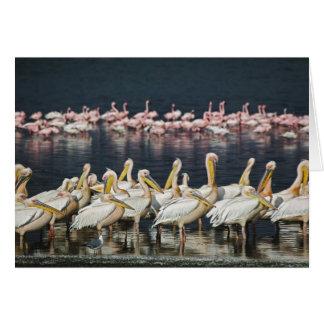 Cartão Pelicanos brancos, onocrotalus do Pelecanus, lago