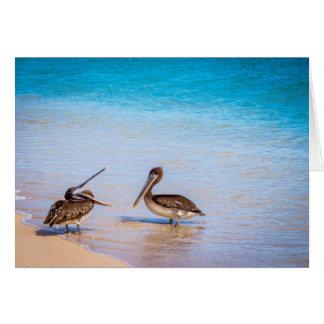 Cartão Pelicanos da praia de Bachas