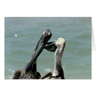 Cartão Pelicanos de Brown que Preening