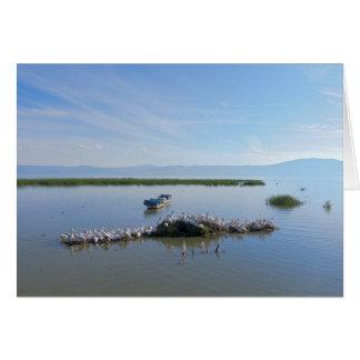 Cartão Pelicanos de Chapala do lago