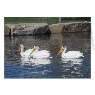 Cartão Pelicanos Notecards